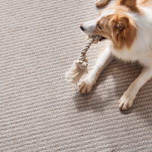Dog on Carpet | Dalton Wholesale Floors