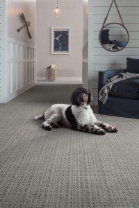 Dog sitting on Carpet | Dalton Wholesale Floors